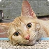 Adopt A Pet :: Sunny - Centerburg, OH
