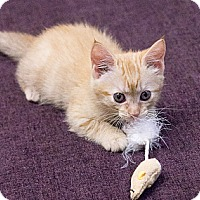 Adopt A Pet :: Sherwood - Chicago, IL