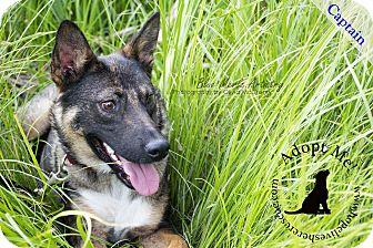 Shepherd (Unknown Type) Mix Dog for adoption in Edmonton, Alberta - Captain