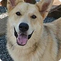 Adopt A Pet :: Charm - Athens, GA