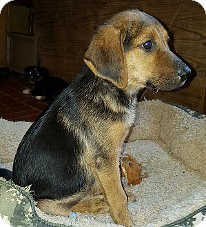 Hound (Unknown Type)/Shepherd (Unknown Type) Mix Puppy for adoption in Trenton, New Jersey - Alma