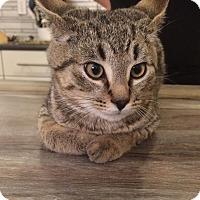Adopt A Pet :: Manny - Edmonton, AB
