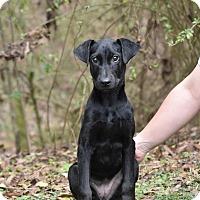 Adopt A Pet :: Adele - South Dennis, MA
