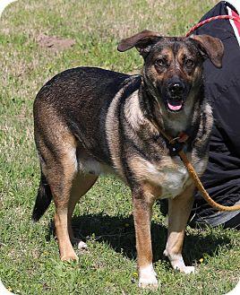 German Shepherd Dog Mix Dog for adoption in Lacey, Washington - Charlie