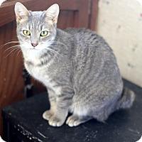 Adopt A Pet :: Bobbie - Dalton, GA
