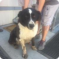 Adopt A Pet :: Maizy - Fresno CA, CA