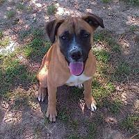 Adopt A Pet :: Sadie - Harmony, Glocester, RI