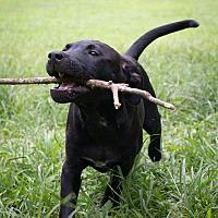 Adopt A Pet :: Skye - Bowie, MD