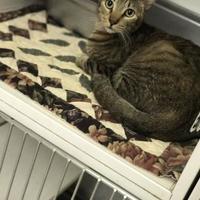 Adopt A Pet :: Gino - Bradenton, FL