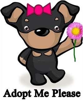 Miniature Pinscher Mix Dog for adoption in Appleton, Wisconsin - Knubbin
