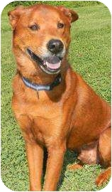Chow Chow Mix Dog for adoption in Lancaster, Ohio - Jake