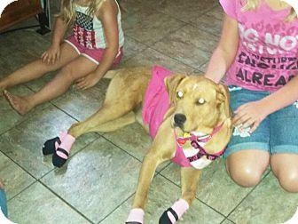Labrador Retriever Mix Puppy for adoption in Wichita, Kansas - Pup