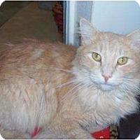 Adopt A Pet :: Nick - El Cajon, CA