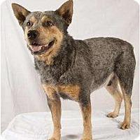 Adopt A Pet :: Carl - Newcastle, OK