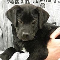 Adopt A Pet :: Little - Cumming, GA