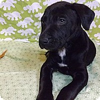 Adopt A Pet :: Milan - Houston, TX