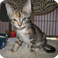 Adopt A Pet :: Aphrodite - Shelton, WA