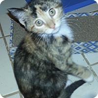 Adopt A Pet :: Liliana - Pittstown, NJ