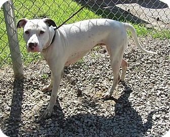 Terrier (Unknown Type, Medium) Mix Dog for adoption in Flint, Michigan - Shania - Adopted
