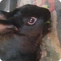 Adopt A Pet :: Daniel - Maple Shade, NJ