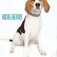 Adopt A Pet :: Huckleberry - in Maine - kennebunkport, ME