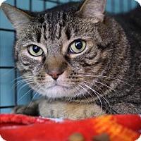 Adopt A Pet :: Mr. Jackson - Tallahassee, FL