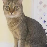 Adopt A Pet :: Kitty (Merritt Island Adoption Center) - Cocoa, FL
