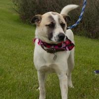 Adopt A Pet :: Podrick - Hopkins, SC