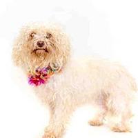 Adopt A Pet :: CHANEL - Orlando, FL