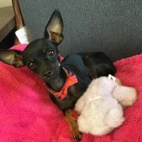 Adopt A Pet :: Dobby - Visalia, CA