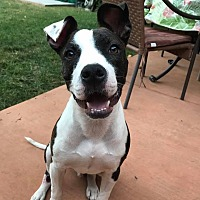 Adopt A Pet :: Opie - Lincoln, CA