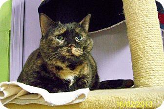 Domestic Shorthair Cat for adoption in Dover, Ohio - Mattie