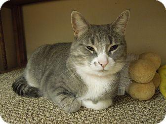 Domestic Shorthair Cat for adoption in Medina, Ohio - Pinky