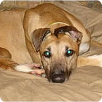 Adopt A Pet :: Pizzazz - Windsor Heights, WV