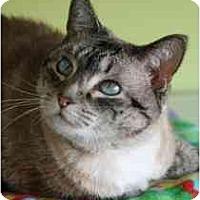 Adopt A Pet :: Mercedes - Marietta, GA