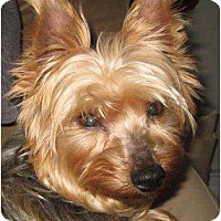 Adopt A Pet :: Loralai - Rigaud, QC