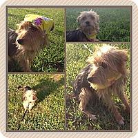 Adopt A Pet :: Phoebe - Sardis, TN