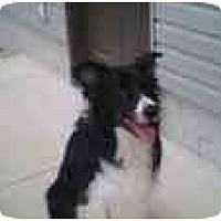 Adopt A Pet :: Goose-ADOPTED! - Tiffin, OH