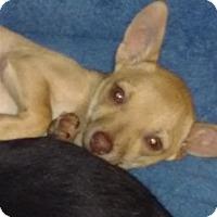 Adopt A Pet :: Dusty - Tucson, AZ