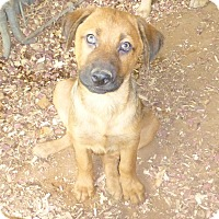 Adopt A Pet :: Ben - Katy, TX