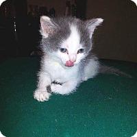 Adopt A Pet :: Chance - Putnam, CT