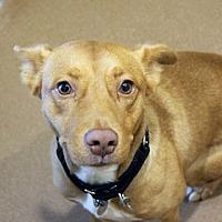 Adopt A Pet :: Catalonia - Chicago, IL