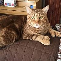 Adopt A Pet :: Marley - Riverside, CA