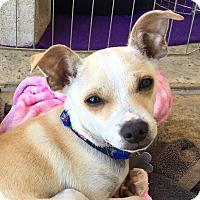 Adopt A Pet :: Odie - San Diego, CA