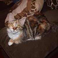 Adopt A Pet :: Lisa - Salisbury, NC