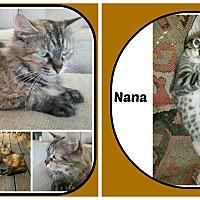Adopt A Pet :: MUDGE & NANA - Malvern, AR
