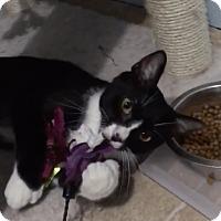 Adopt A Pet :: Pawley - Richmond, VA