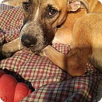 Adopt A Pet :: DeeDee - in Maine - kennebunkport, ME