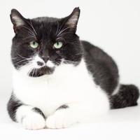 Adopt A Pet :: Charles - Kingston, ON