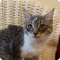 Adopt A Pet :: Daenerys - Berlin, CT